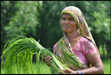 (c) Climate smart villages in South Asia
